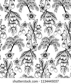Seamless vector pattern with  Goji, Lycium barbarum  plant on white background