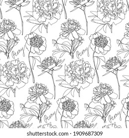 Seamless vector pattern with hand drawn monochrome peony flowers in line art style