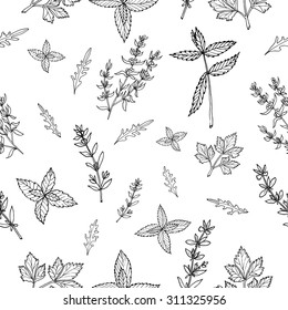 Seamless vector pattern with hand drawn herbs and spices