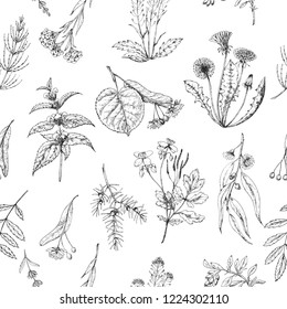 Seamless vector pattern of medicinal herbs. Wild healing plants. Vintage flowers. Black and white hand drawing illustration. Engravings style. Botanical illustration. Pharmacy herbs. Sketch.