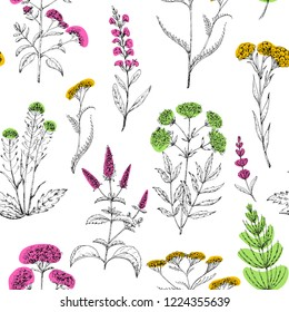 Seamless vector pattern of medicinal herbs. Wild healing plants. Vintage flowers. Colorful hand drawing illustration. Engravings style. Botanical illustration. Pharmacy herbs. Sketch.