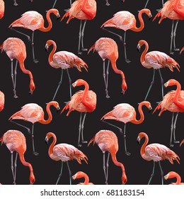 Seamless Vector Pink Flamingo Pattern
