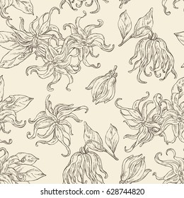 Seamless with ylang-ylang: plant, flower ylang-ylang and leavs. Cosmetics and medical plant. hand drawn.