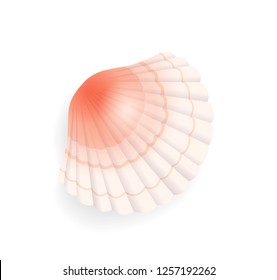 Seashell conch icon closeup vector. Detailed mussel exotic sealife. Clam found on seashore, coastline of sea or ocean, cockle of pink color with lines