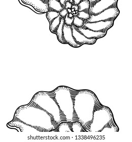 Seashell engraving seamless pattern illustration on white backgroud. Line art repeatable shell