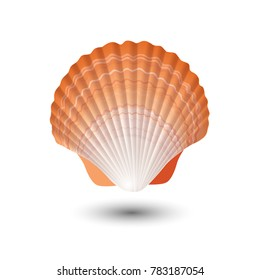 Seashell logo, isolated. Sea shell in vector.