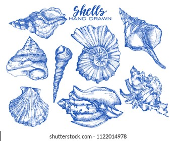 Seashell, mollusk,sea shell,nautilus, nature sea vector set. Sea shell Hand drawn seashell marine engraving illustration on white background. Sea shell etch sketch drawing
