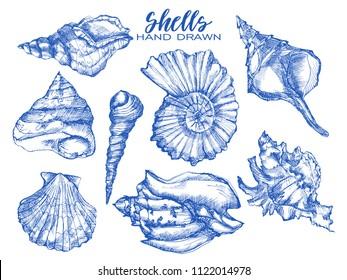 Seashell, mollusk,sea shell,nautilus, nature sea vector set. Sea shell Hand drawn seashell marine engraving illustration on white background. Sea shell etch sketch drawing