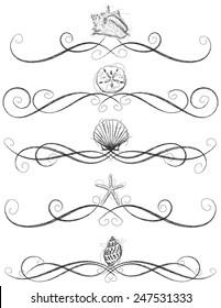 Seashell page rules Sketchy, hand drawn seashell page rules