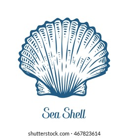 Seashell, sea shell, nature ocean aquatic underwater vector. Hand drawn Seashell marine engraving illustration on white background