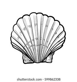 Seashell, sea shell, nature scallop ocean aquatic underwater. Hand drawn marine engraving illustration on white background