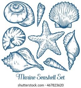 Seashell, sea shell, starfish nature ocean aquatic underwater vector seashell set. seashell Hand drawn sea shell marine engraving illustration on white background