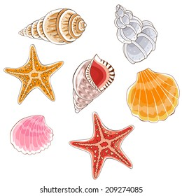 Seashell set - Illustration