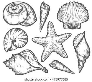 Seashell, starfish nature ocean aquatic underwater vector set. Hand drawn marine engraving illustration on white background