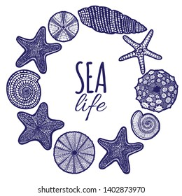 Seashell Starfish Urchin Composition. Shells and Sea Animals Template in Graphic Style for Cards Surface Design Fliers Banners Invitations Posters. Vector Illustration