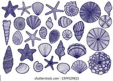 Seashell Starfish Urchin Set. Shells and Sea Animals in Graphic Style for Cards Surface Design Fliers Banners Invitations Posters. Vector Illustration