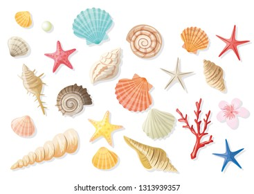 Seashell summer illustration set