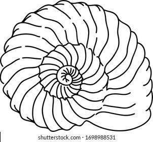 seashell vector illustration / seashell logo element / spiral nautilus underwater life / summer vacation beach travel logo / archaeology history ancient fossil mollusk shell