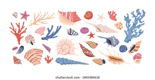 Seashells, corals and starfishes collection isolated on white background. Marine set with sea shells. Collection of seabed flora and fauna design elements. Colorful flat vector illustration on white