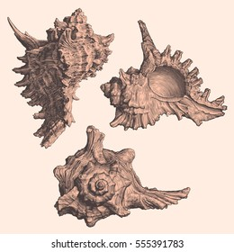 Seashells. Design set. Hand drawn engraving. Vector vintage illustration. Isolated on color background. 8 EPS