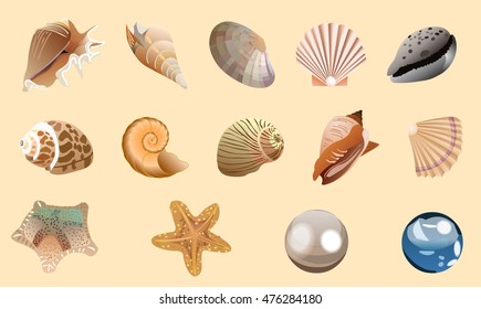 Seashells - vector illustration