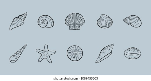 Seashells vector illustration - line art shells - icons set