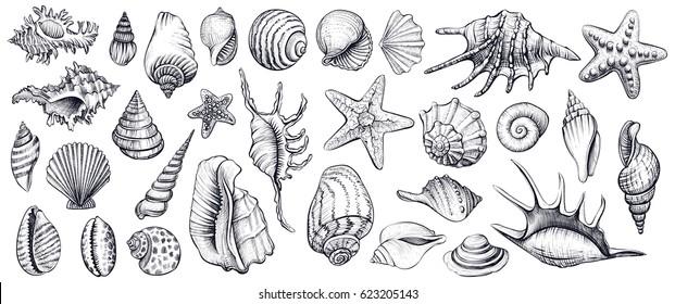 Muscheln, Vektorset. Handgezeichnete Illustrationen von Gravierlinien. Sammlung von realistischen Skizzen verschiedene Muschelschalen verschiedenen Formen.