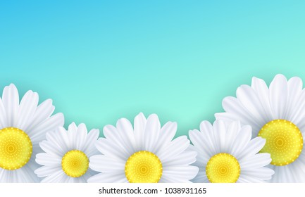 Seasonal background. Camomiles flowers on a green background. Vector illustration. EPS 10