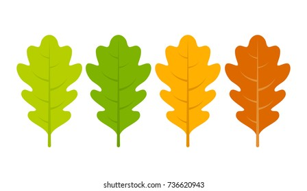 Seasonal specific oak leaves icon vector illustration isolated on white background