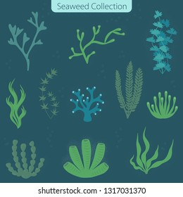 Seaweed collection - vector illustration