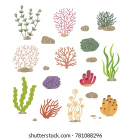Seaweed, corals and stones. Underwater natural plants isolated. Coral and underwater marine plant.