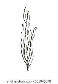 seaweed drawing