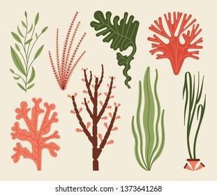 Seaweed set vector illustration isolated on white. Sea plants and aquatic marine algae.