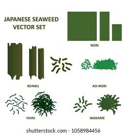 Seaweed vector set. Japanese wakame, nori, hijiku, konbu and ao nori algae food. Vector.