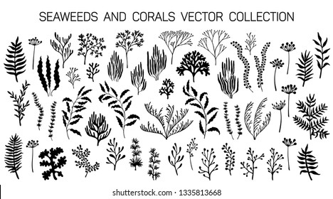 Seaweeds and coral reef underwater plans vector collection. Aquarium, ocean and marine algae water plants, corals isolated on white. Black seaweeds and polyps silhouettes set. Laminaria kelp and other