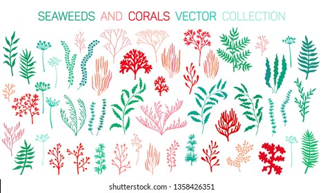 Seaweeds and coral reef underwater plans vector collection. Aquarium, ocean and marine algae water plants, corals isolated. Red green seaweeds and polyps silhouettes set. Laminaria kelp and other