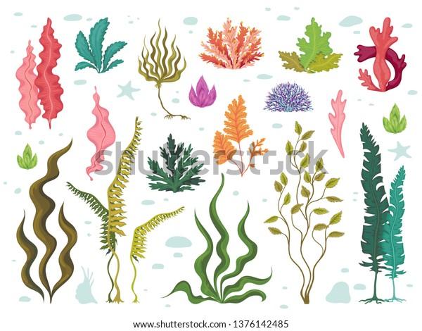 112,589 Underwater Illustrations, Royalty-Free Vector Graphics & Clip Art -  iStock