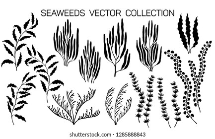 Seaweeds underwater plans vector collection. Aquarium, ocean and marine algae water plants isolated on white. Black seaweeds silhouettes set. Laminaria kelp and other