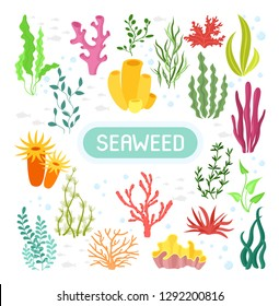 Seaweeds. Vector illustration of seaweeds, planting, marine algae and ocean corals silhouettes. Underwater plants for aquarium decor. Isolated set on white background. Nature seaweed marine.