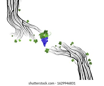 secret of wine concept, two human hand looks like grape branches on the white background, grape touch of nature concept,  eco wine idea vector