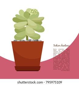 Sedum Hintonii Indoor Plant In Pot Banner Template Vector Illustration
