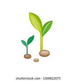 Seed bean. Young plant. Ecology symbol. Green sprout growth. Vector illustration