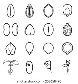 Seed icon set, which represents the most common types of crop seeds such as beans, buckwheat, wheat, sunflower, pumpkin, castor, soy etc. Vector illustration