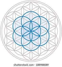 Seed of Life in the center of the Flower of Life, a geometrical figure, composed of multiple evenly-spaced, overlapping circles, forming a flower-like pattern. Isolated vector on white background.