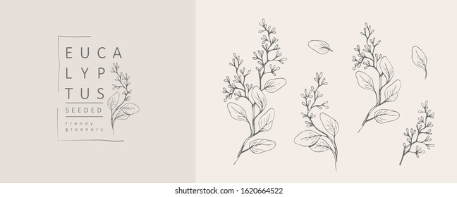 Seeded eucalyptus logo and branch. Hand drawn wedding herb, plant and monogram with elegant leaves for invitation save the date card design. Botanical rustic trendy greenery vector illustration