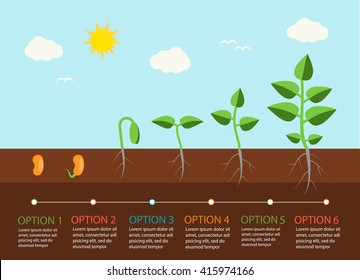 Seedlings growing infographics with plants grow stages, vector illustration