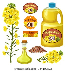 Seeds and rape flowers, canola oil. Brassica napus. Isolated vector illustration  on white background.