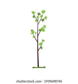 Seeds and seedlings seedlings of spring plants. Vector illustration.