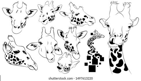 A selection of different facial expressions giraffe in black and white.