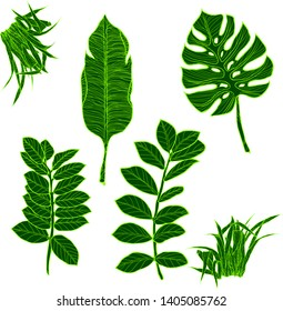 A selection of illustrations of green tropical palm leaves, monsteras